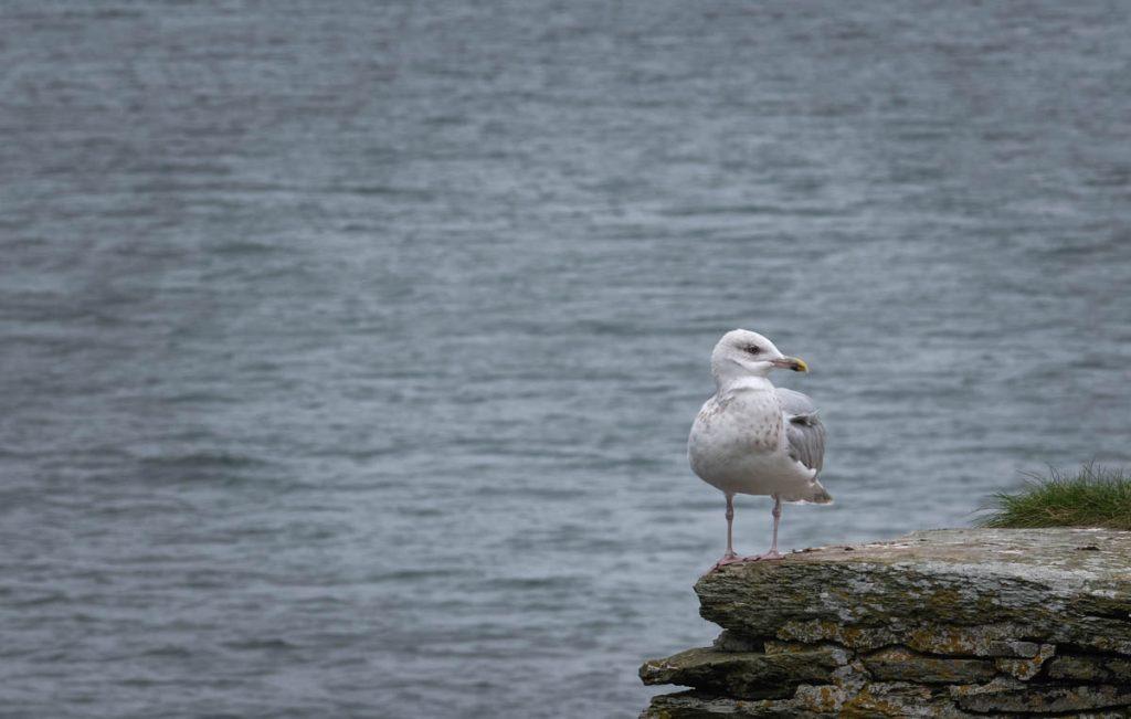 Gull on a wall