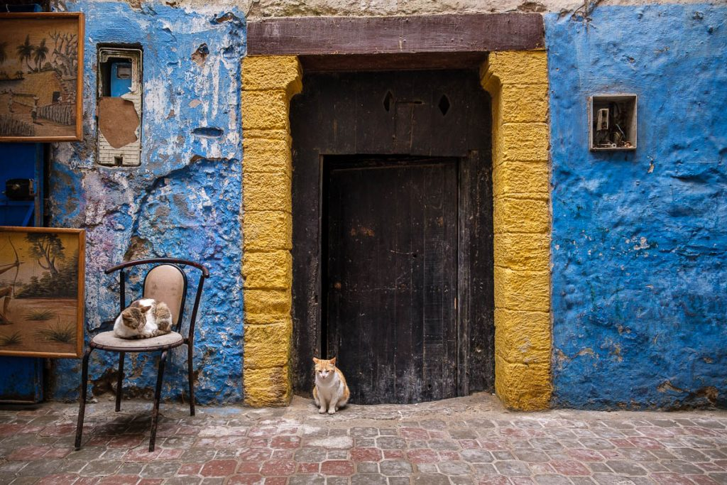 Cats at a door in the city of Essouria