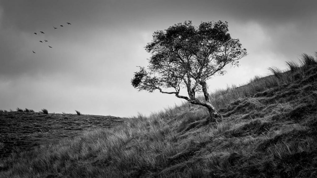 The hill on the tree monochrome