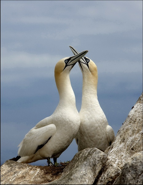 Courting couple
