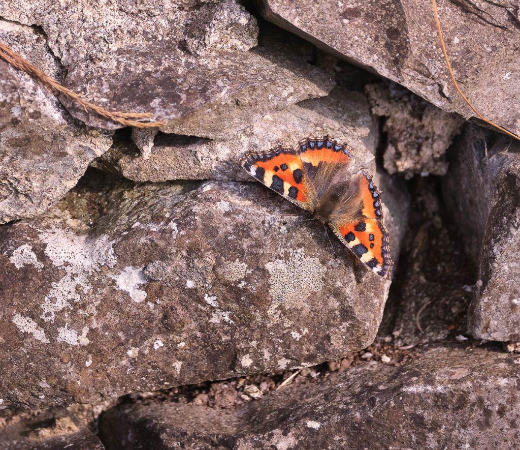 butterfly on stone.jpg