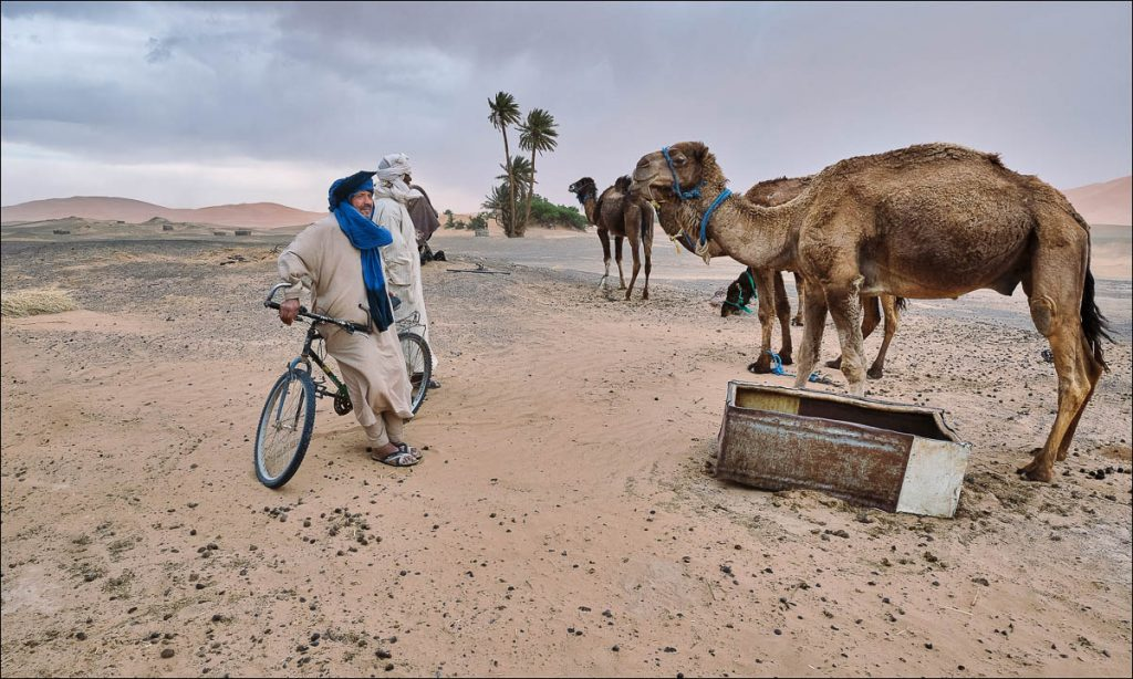 Camel herders at edge of the sahara