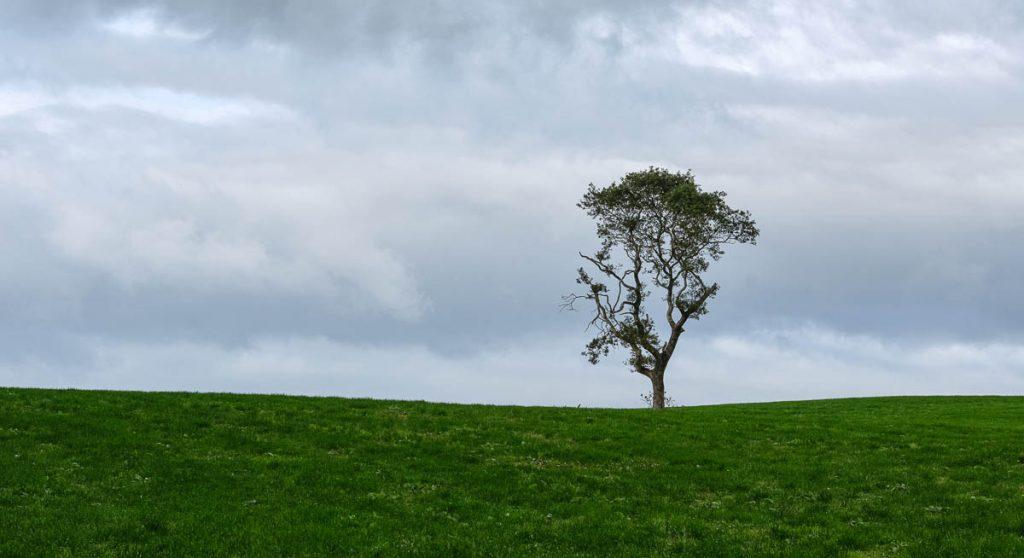 lone tree on the horizon