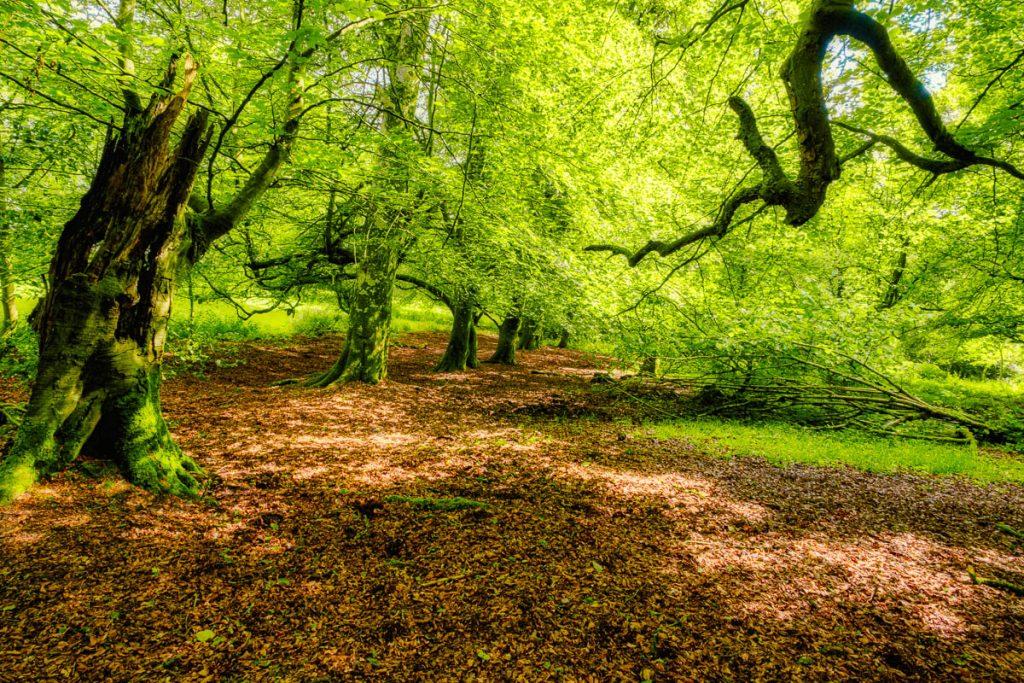 mullingar forest