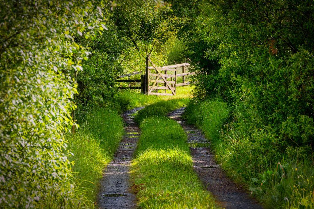 mullingar laneway