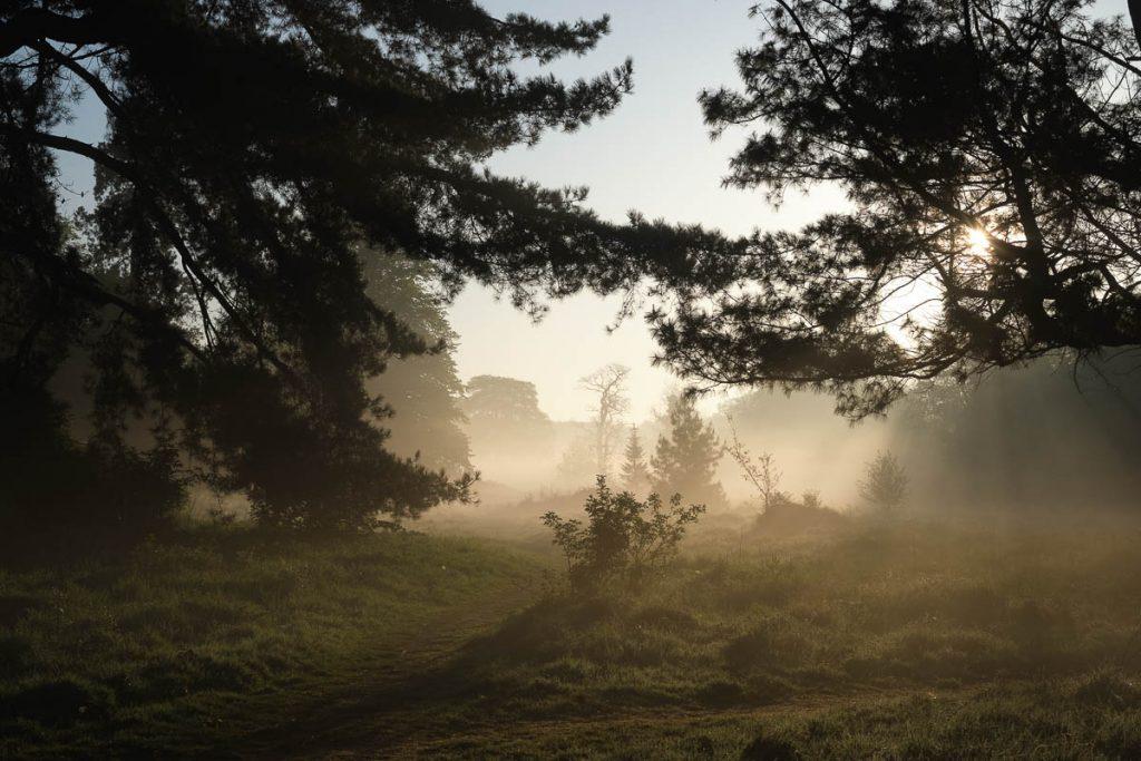 Castletown park in mist