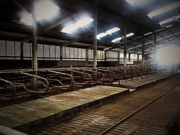 cow-prison