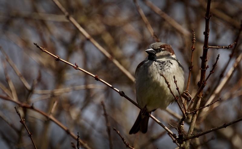 garden-birds-06.jpg