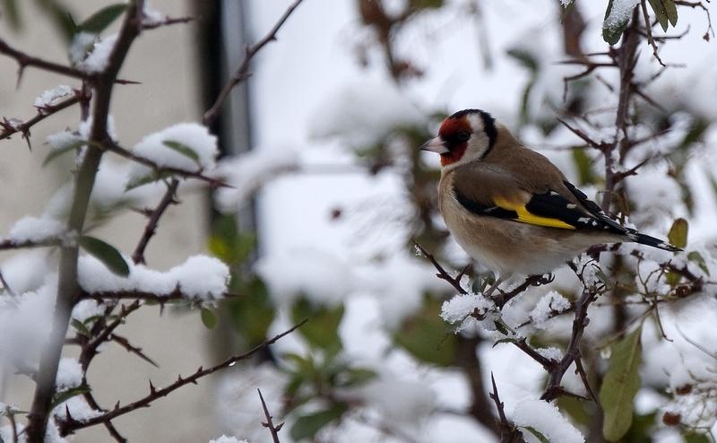 garden-birds-10.jpg