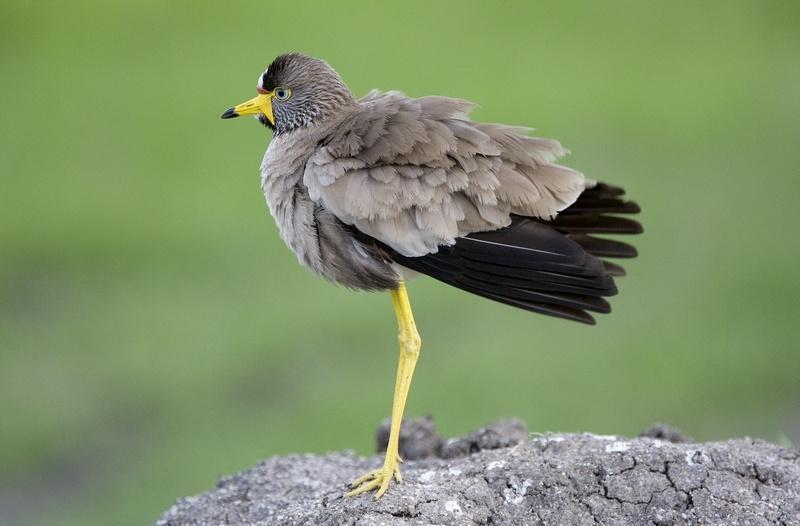 uganda-wildlife-08.jpg