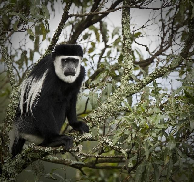 uganda-wildlife-10.jpg