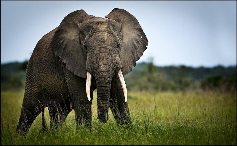 uganda_wildlife-15